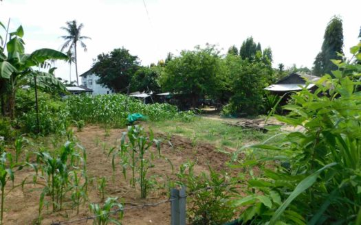 Ethus Real Estate Land Rawai Beach For Sale (3)